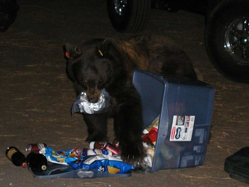 Protect bears by completely securing your food. The responsibility is on you.