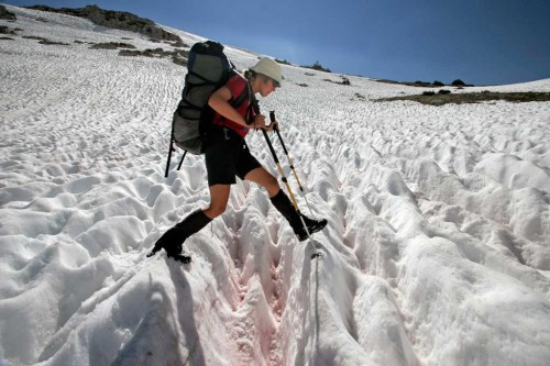 Snow cups on the Pacific Crest Trail. Photo by Philipp Kobel