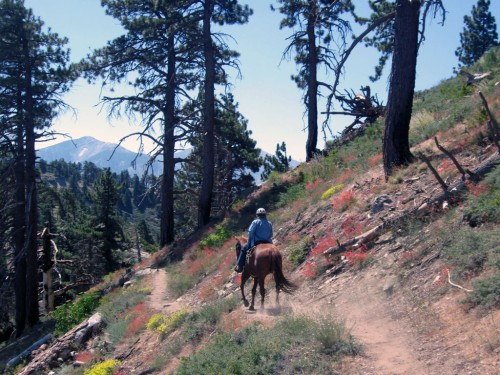 A Pacific Crest Trail rider heading towards Mt. Baldy. Photo by Mary Bays