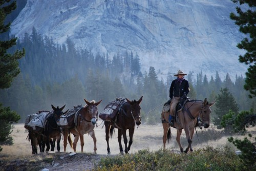 A pack train rides through Tuolumne Meadows. Photo by Jeannette Sivertsen