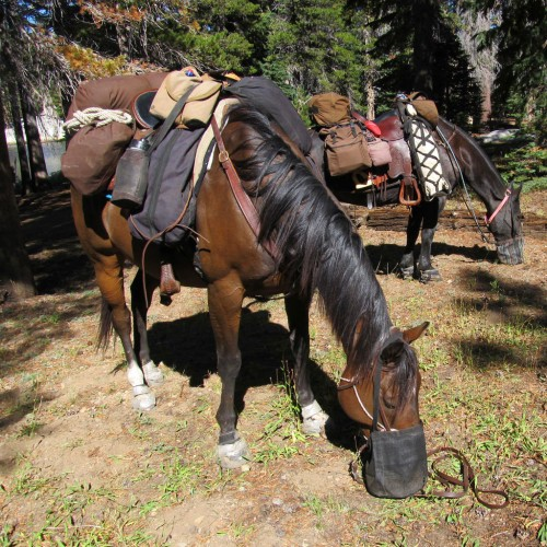 Equestrians on the PCT. Photo by Susan Bates