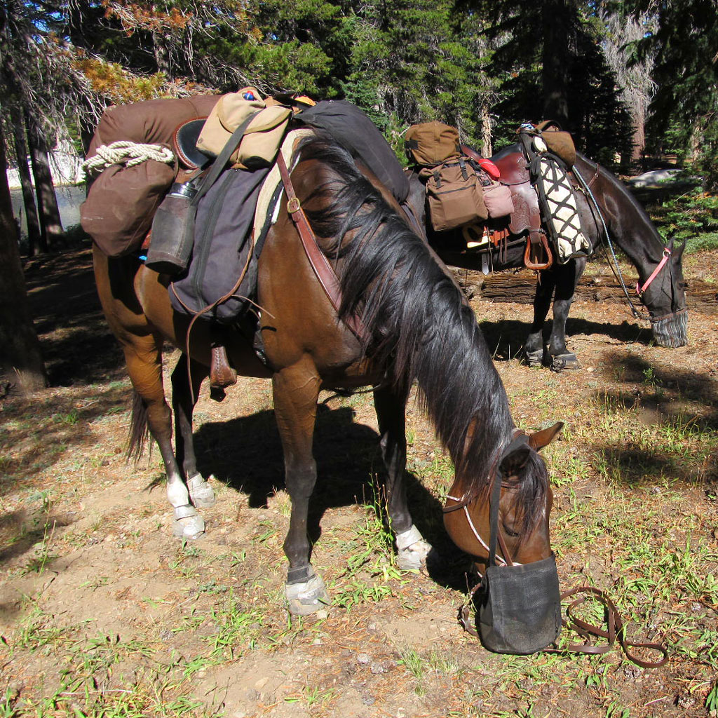 Equestrian Animal Choices Pacific Crest Trail Association