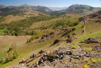 2013 Photo Contest - Equestrian - Honorable Mention Dude riders in Mokelumne Wilderness.  Photo by: Ryan Choi