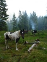 2013 Photo Contest - Equestrian - Second Place Near Glacier Lake in September 2012, campfire smoke mingles with smoke from the Wenatchee Complex Fires.  Photo by: Meredith Ishida