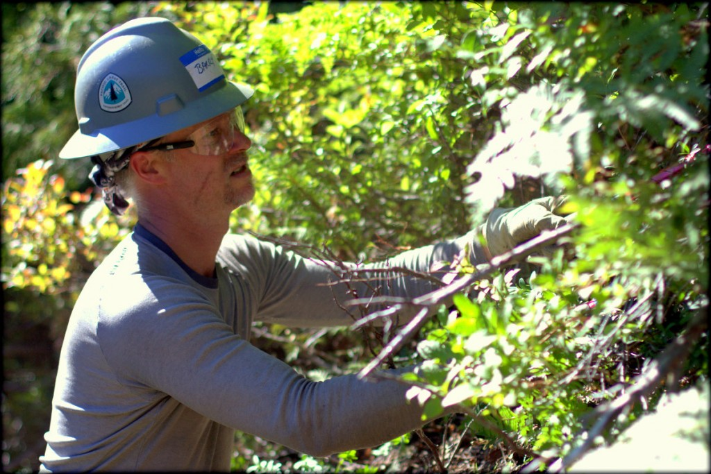 """Thru-hiker and PCTA crew leader Barry """"Token Civilian"""" Teschlog cutting brush on the project. Photo by Ryan"""