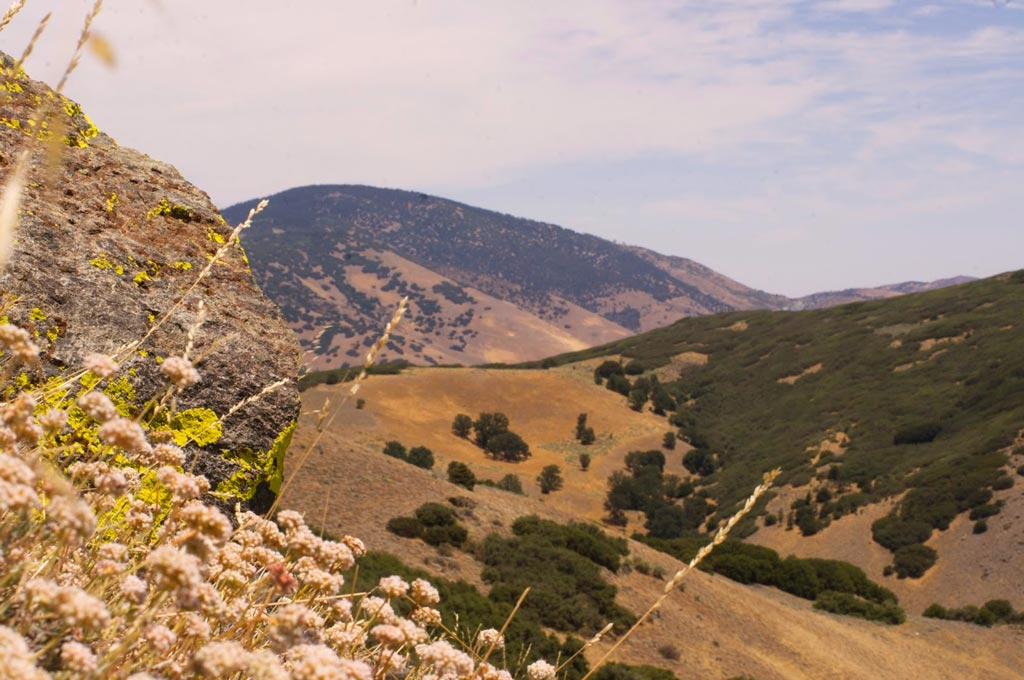 The PCT realignment will take hikers into the Tehachapi Mountain high country on Tejon Ranch. [Photo: Tejon Ranch Conservancy]