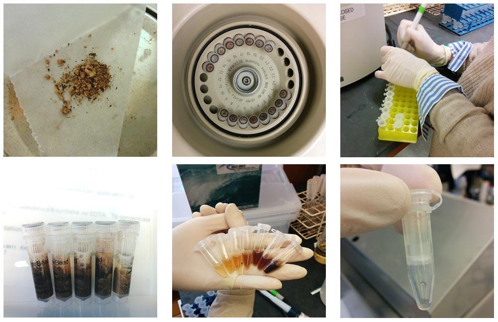 Lab-Images