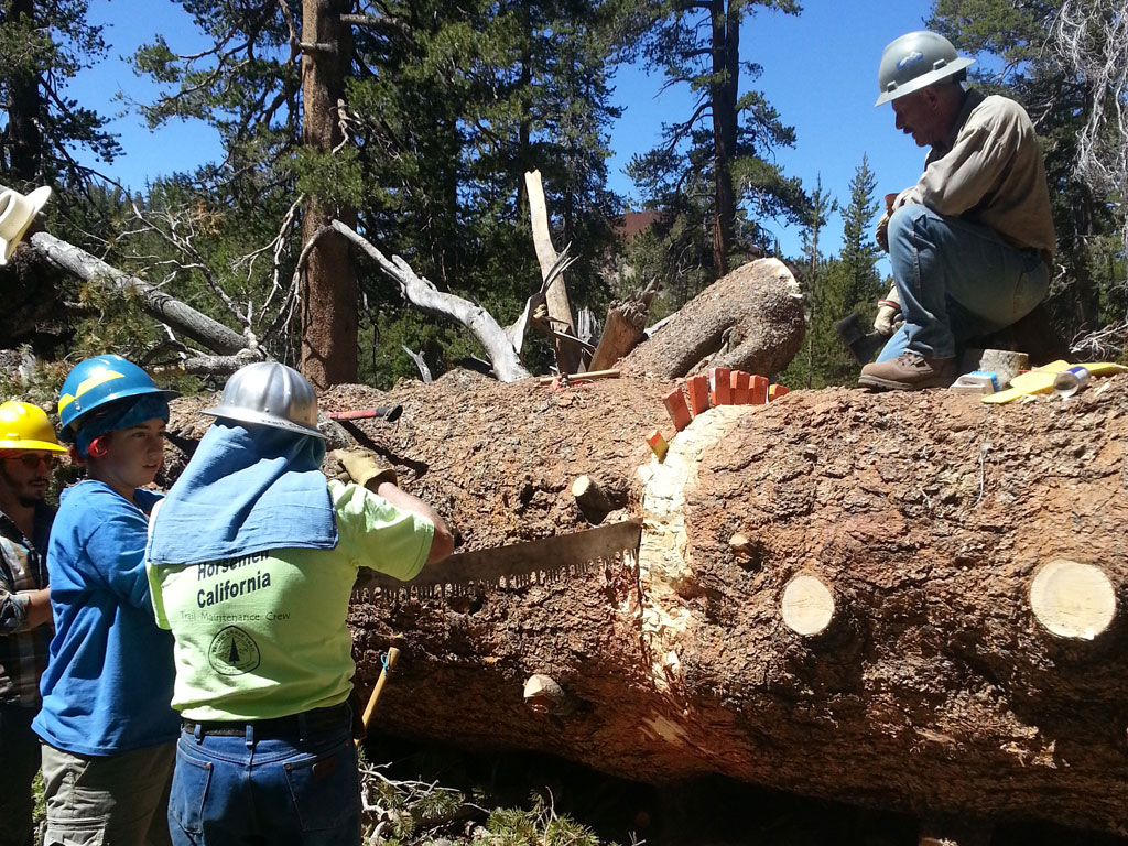We're champs at clearing big trees with crosscut saws.
