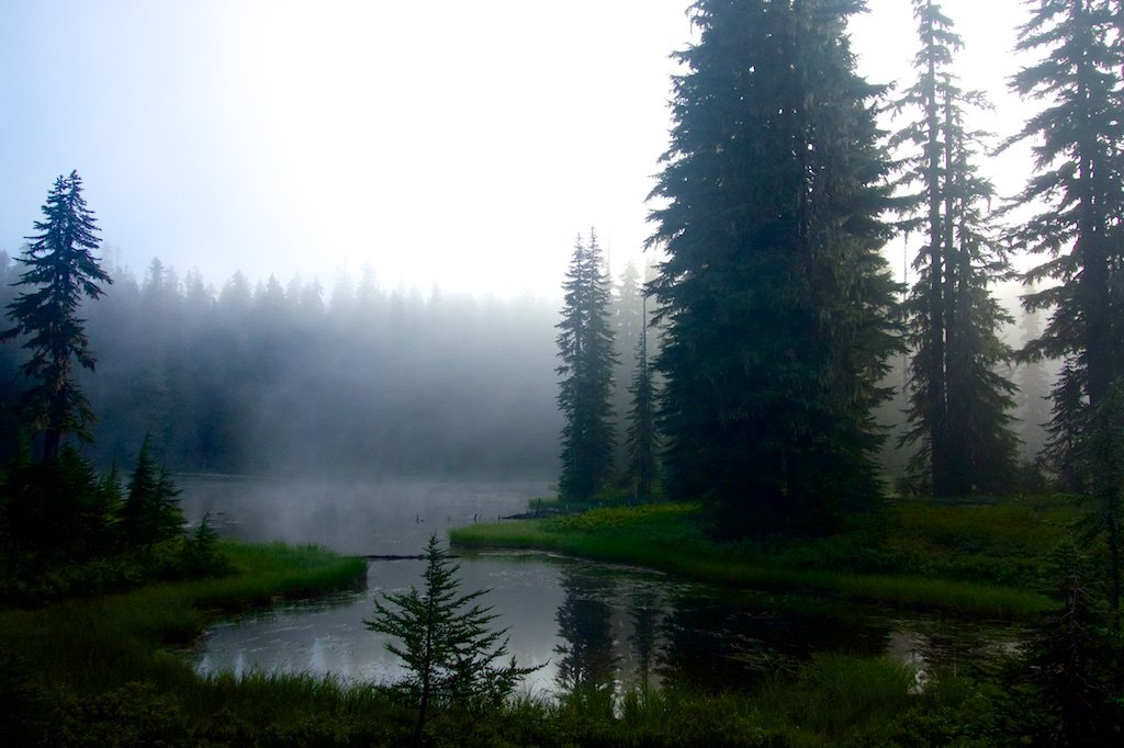 Mist blankets a pond near Mt. Adams.Washington State