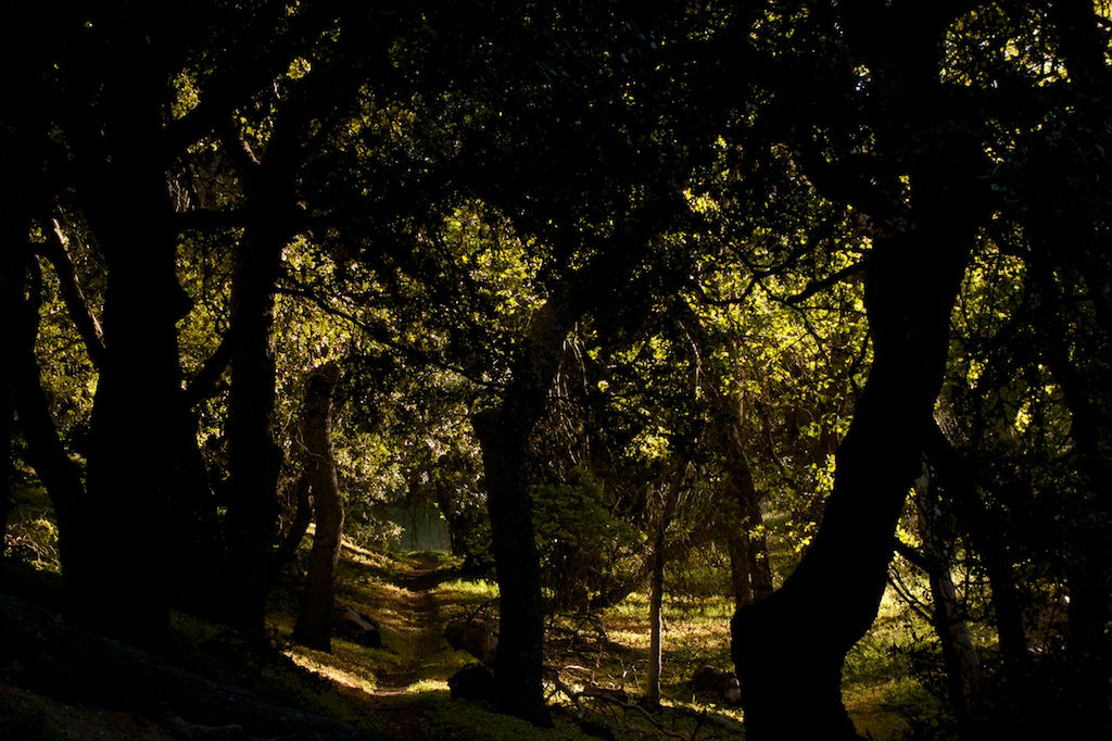 The shade of an Oak Grove offers respite during a long waterless section. Southern California