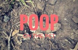 POOP-(2)