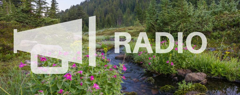 RADIO-(1)