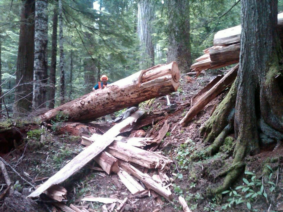 One of the many logs across the trail.
