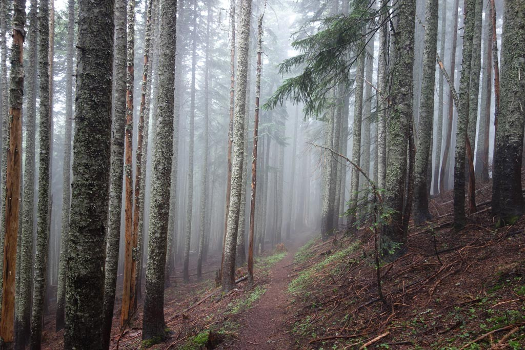 A misty, silent, Pacific Crest Trail. Photo by Susan Caster.