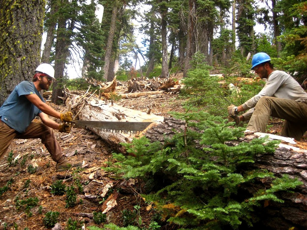 Clearing blowdown with a crosscut saw in the Marble Mountains.