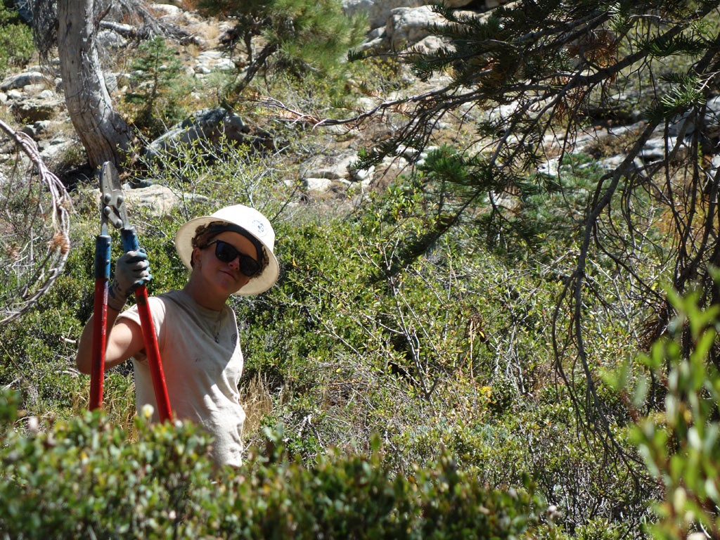 A corp crew member clearing a new section of PCT in the northern SIerra.