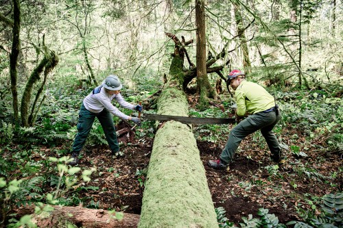 Basic Saw Crew Training_ShondaFeather-2opt