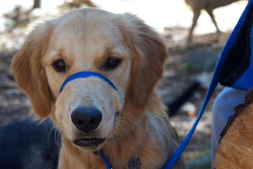 Hiking dog on leash.