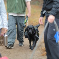 Photo of dog hiking on leash with backpack.