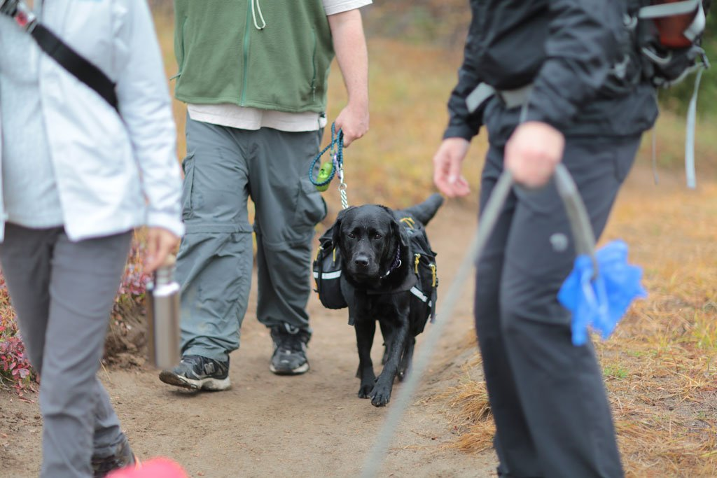 Hiking With Dogs Pacific Crest Trail Association