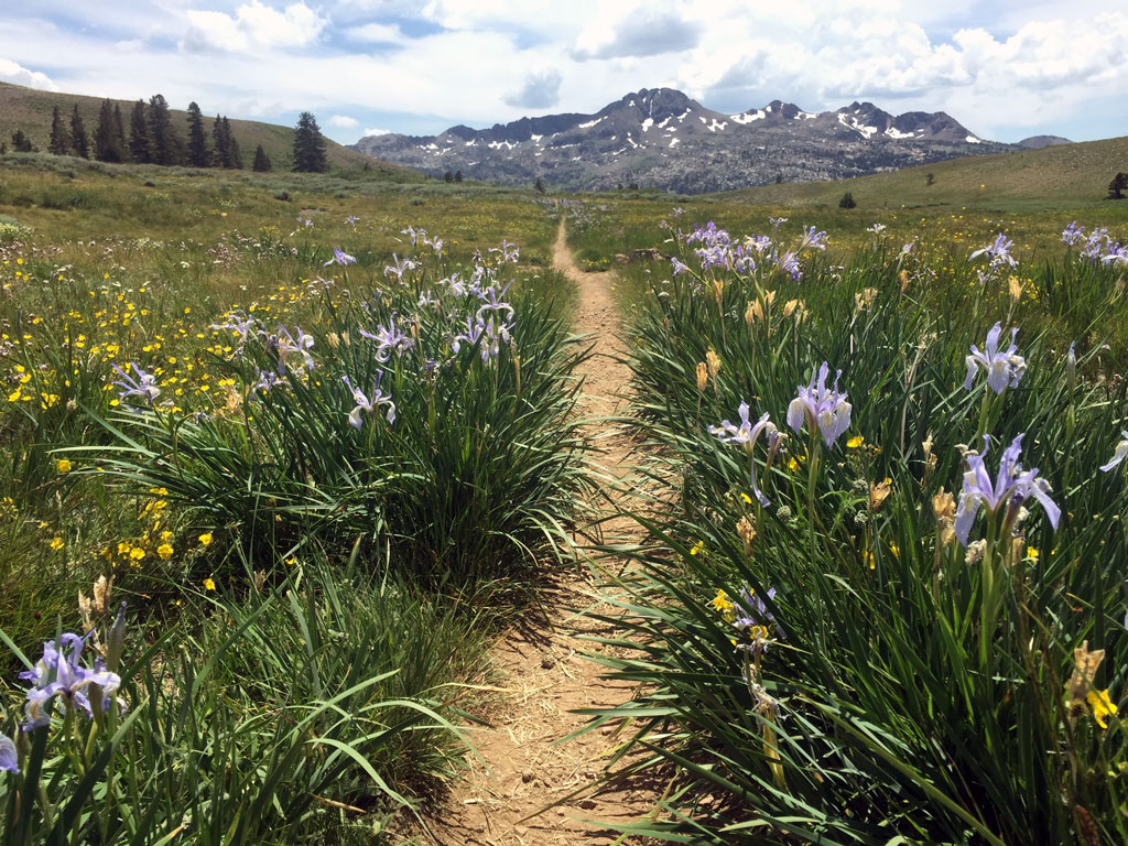 Staying in the center of the trail, even when it's wet, helps keep trailside wildflowers vibrant once they bloom later in the year. By planning ahead and preparing, you might choose to hike in boots when it's wet, or delaying your trip. Photo by Andrew Geweke.