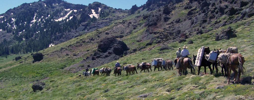 Dennis' mule train near Ebbetts Pass.