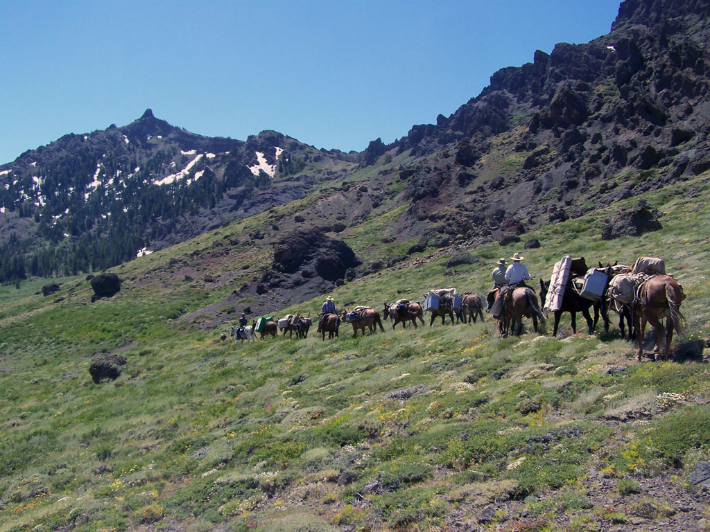 Dennis' mule train near Ebbetts Pass.