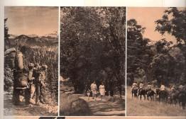 The landmark Trails for American study.