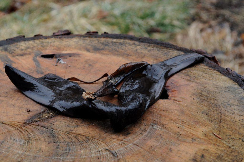 Photo of a rotting banana peel left outside on a stup
