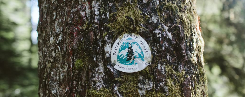 A Pacific Crest Trail sign on a tree remained standing. Photo by Vincent Carabeo/Uphill Designs.