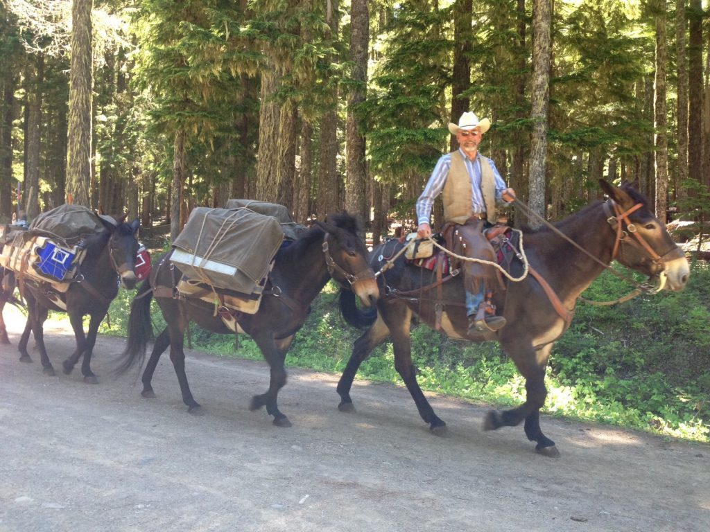 Jim Forsman leads the pack string into the Gifford Pinchot National Forest. Thank you Backcountry Horsemen and volunteer packers for supporting trail maintenance projects on the Pacific Crest Trail!