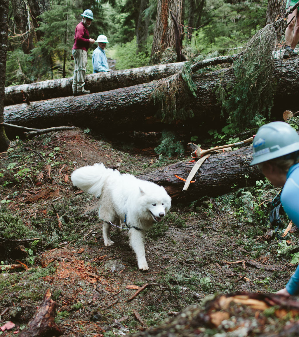 A dog on the Pacific Crest Trail steals the show during a trail maintenance project in the Pacific Northwest. Photo by Dan Sedlacek of Uphill Designs.