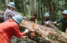 How to use a two handle crosscut saw to clear a trail. Here we are using wedges to help the crosscut glide easily. Photo by Vincent Carabeo/Uphill Designs.