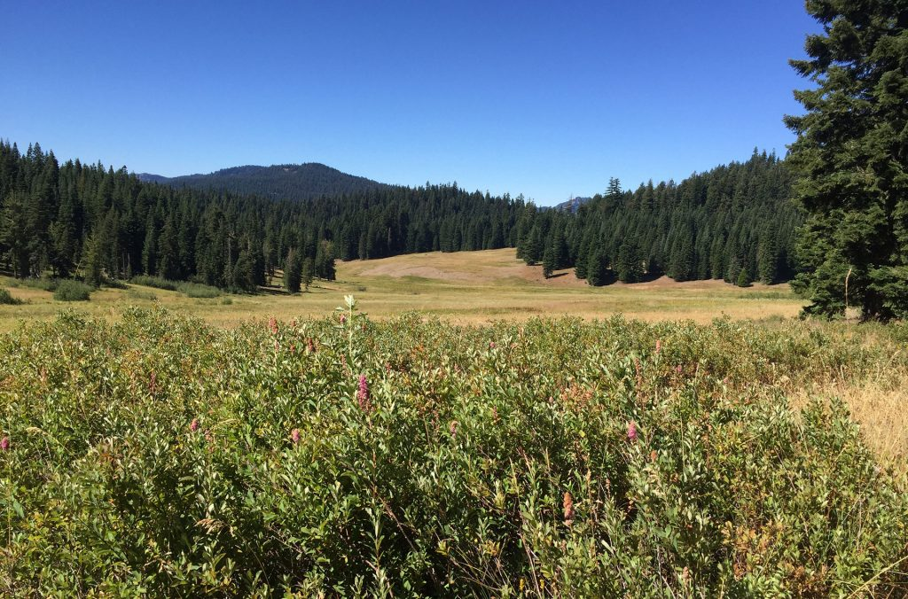 Looking across Donomore Meadows toward the Pacific Crest Trail.