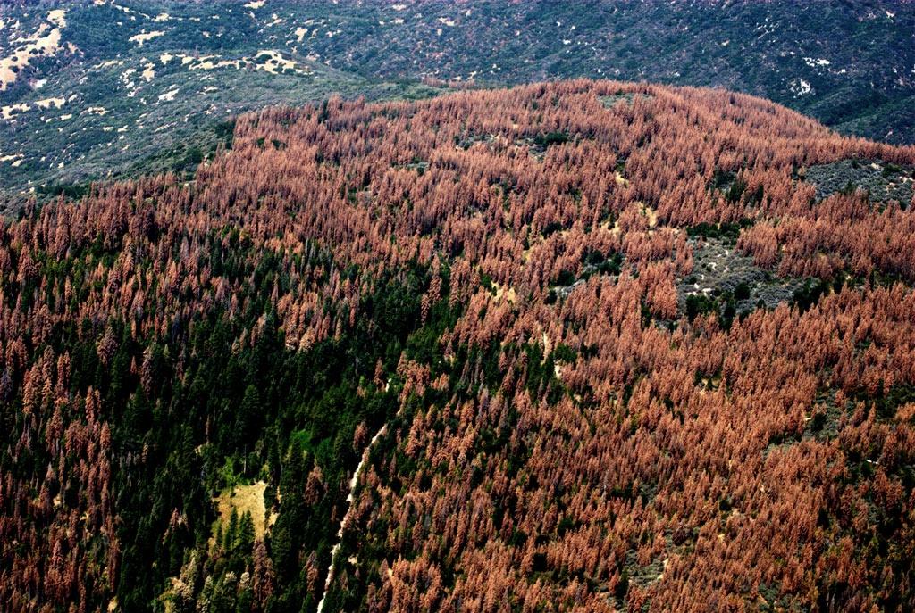 Aerial detection survey photo taken August 2016. Courtesy of U.S. Forest Service, Region 5