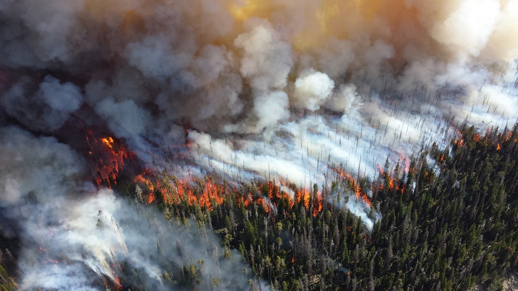 You don't want to be anywhere near a large wildfire. Photo by Mike Lewelling, National Park Service