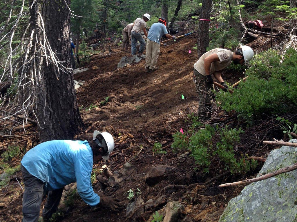Cutting trail through one of the forested segments. Photo by Angie Williamson