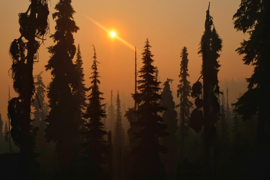 The setting sun glows orange through smoke-filled fir trees.